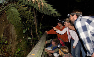 Up to 57% off Adult & Child Passes for Two-Hour Night Rainforest Tour (value up to $210)