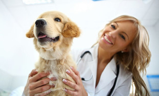 $30 for a Cat or Dog Veterinary Health Check & Vaccination or $45 to incl. Kennel Cough Vaccination (value up to $85)