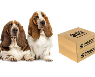 $24.99 for a Surprise Box of Dog Treats & Products – Options Available for Different Sized Dogs